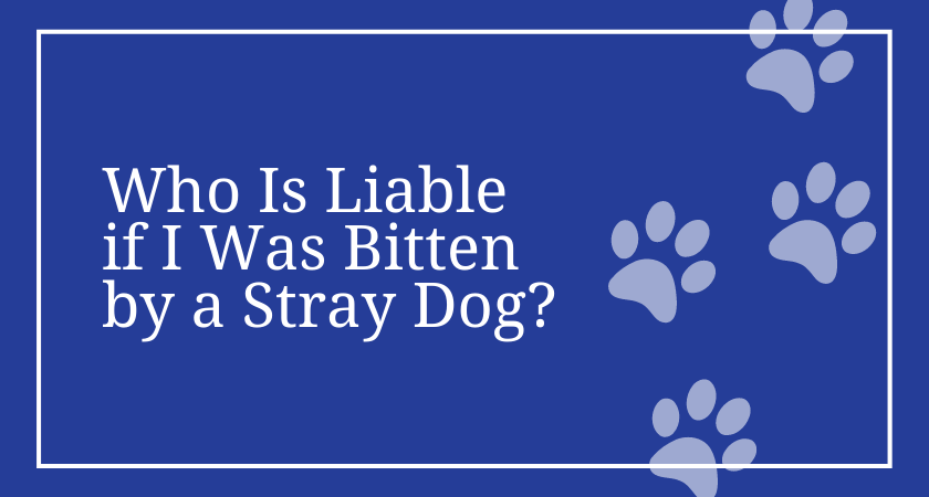 Who Is Liable if I Was Bitten by a Stray Dog