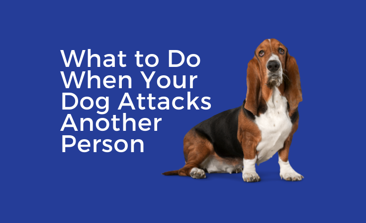 What to Do When Your Dog Attacks Another Person